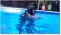 Un singe fait de la plongée