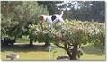 Un chien grimpeur d'arbres