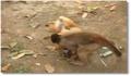 Un chien s'amuse avec un singe
