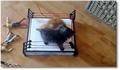 Deux chatons dans un ring de catch