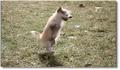 Un chien à deux pattes