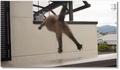 Un chat suicidaire fait le saut de l'ange