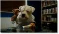 Un homme chien mange à table
