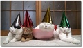 Lendemain de fête difficile pour ces chats !