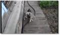 Un chien porte un chat