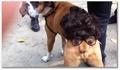 Un déguisement pour chien
