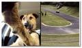 Un chien qui conduit une voiture !