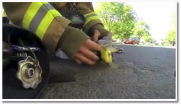 Un pompier réanime un chat