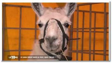 Lamaoutai : Serge le Lama