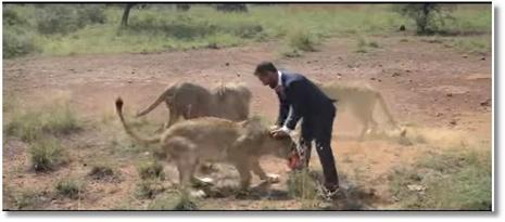 Il joue au foot avec des lions !