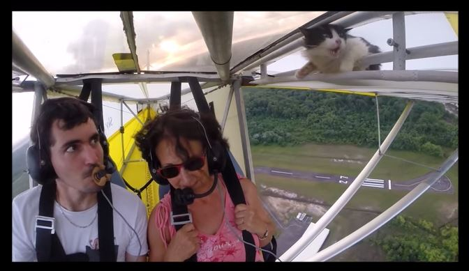 Un chat s'invite à un vol en deltaplane
