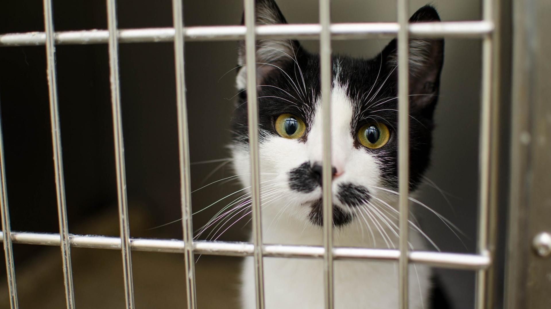 Comparer les cages de transport pour chat pour mieux choisir